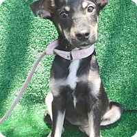 Adopt A Pet :: Larkin - San Diego, CA