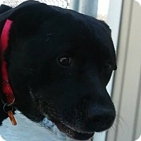 Adopt A Pet :: Oman - Fremont, MI