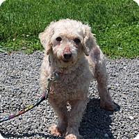 Adopt A Pet :: Queene Anne - Elyria, OH