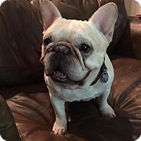 Adopt A Pet :: Oscar - Odessa, FL