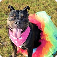 Adopt A Pet :: 1609-0696 Birdie - Virginia Beach, VA