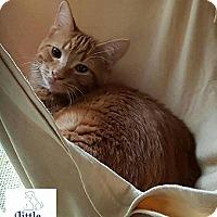 Adopt A Pet :: Diablo - Hamilton, ON