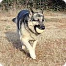 Adopt A Pet :: Sabastian 3368