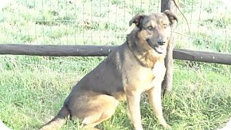 German Shepherd Dog Mix Dog for adoption in Vacaville, California - Casey Jones