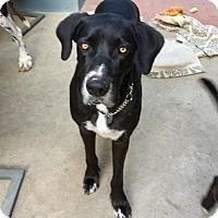 Adopt A Pet :: Jayna - Anaheim, CA