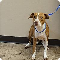 Adopt A Pet :: Kimmie - Oviedo, FL
