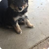 Adopt A Pet :: Hutch - Studio City, CA