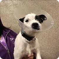 Adopt A Pet :: Marybeth - Mipiltas, CA