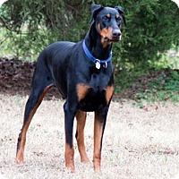 Adopt A Pet :: HOLIDAY - Greensboro, NC
