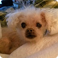 Adopt A Pet :: Suzie Q - Long Beach, NY