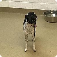 Adopt A Pet :: Dukes - Miami, FL