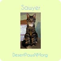 Adopt A Pet :: SAWYER - Pena Blanca, NM