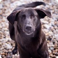 Adopt A Pet :: Jasper - Lewisville, IN