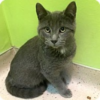 Adopt A Pet :: Moon Beam - Janesville, WI