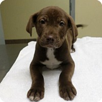 Adopt A Pet :: Adorable Isaiah - Potomac, MD