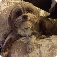 Adopt A Pet :: NESTLE - Los Angeles, CA