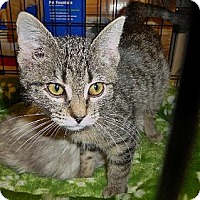Adopt A Pet :: Sparrow - Logan, UT