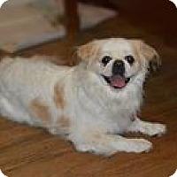 Adopt A Pet :: Buddy - Berlin, WI