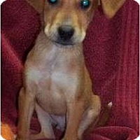 Adopt A Pet :: Dansby Reduced - Londonderry, NH