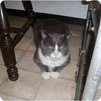 Adopt A Pet :: Ebert - Hamburg, NY