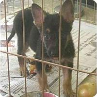 Adopt A Pet :: Fozzie - Fowler, CA