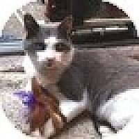 Adopt A Pet :: Pol - Vancouver, BC