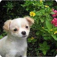 Adopt A Pet :: Gabe - Conroe, TX