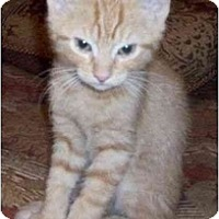 Adopt A Pet :: Norton--adopted! - New Richmond, OH