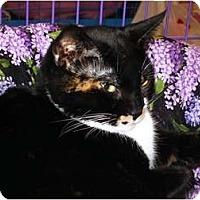 Adopt A Pet :: Cathy Cat - Chesapeake, VA