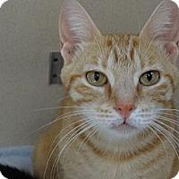 Adopt A Pet :: CASEY - Phoenix, AZ