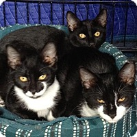 Adopt A Pet :: Sammy - Riverhead, NY