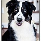 Adopt A Pet :: Zack