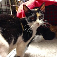 Adopt A Pet :: Lilly - East Brunswick, NJ
