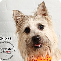 Adopt A Pet :: Kelsee-Pending Adoption - Omaha, NE