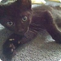 Adopt A Pet :: Jethro - Colmar, PA