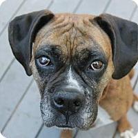 Adopt A Pet :: Katie - Woodinville, WA