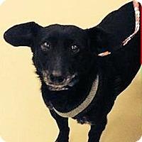 Adopt A Pet :: Bibo - North Ogden, UT