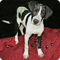 Adopt A Pet :: Holly - Lufkin, TX