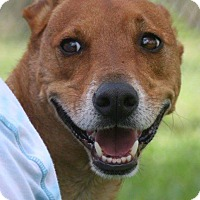 Adopt A Pet :: red - Palmetto Bay, FL