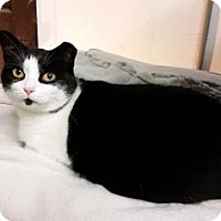 Adopt A Pet :: PANDA! - Cheltenham, PA