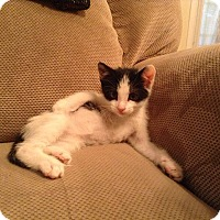 Adopt A Pet :: Buzz - Carencro, LA