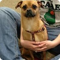 Pug Dog for adoption in Aurora, Illinois - Missy