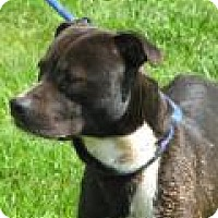 Adopt A Pet :: Lobo D45 - Mineral, VA