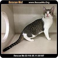 Adopt A Pet :: Twilight - Phoenix, AZ