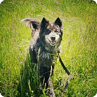Adopt A Pet :: Winter - Tillamook, OR