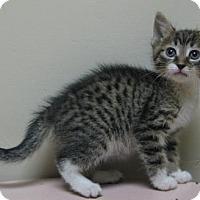 Adopt A Pet :: Adam - Gary, IN
