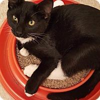 Adopt A Pet :: Shaun - Lacey, WA