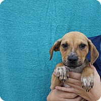 Adopt A Pet :: Miles - Oviedo, FL