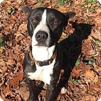 Adopt A Pet :: Poco - North Brunswick, NJ