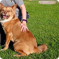 Adopt A Pet :: ASTA - Phoenix, AZ